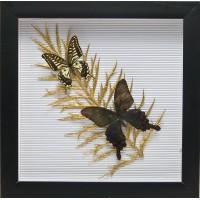 """Бабочки в рамке """"На листе"""" (30,5х30,5х3,5 см) 26056"""